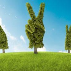 Действуют новые ставки ренты для лесных ресурсов