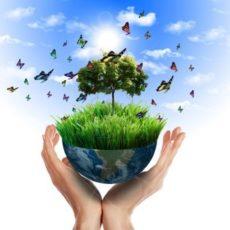 Предоставляем услуги по вывозу твердых бытовых отходов: как определять НДС-обязательства
