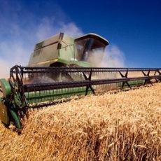 Сельхозпроизводители могут исправить ошибки в номерах спецрежимных НН по 8 декабря включительно