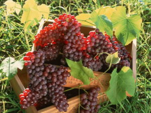Уряд спростив процедуру ліцензування для малих виробників виноробної продукції