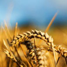 Новий законопроект по НДС для аграріїв