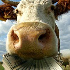 Бюджетные дотации аграриям: изменен принцип расчета