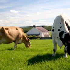 Постановка на учет членов фермерского хозяйства как плательщиков ЕСВ