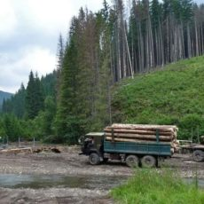 За незаконный вывоз лесоматериалов уже уголовная ответственность